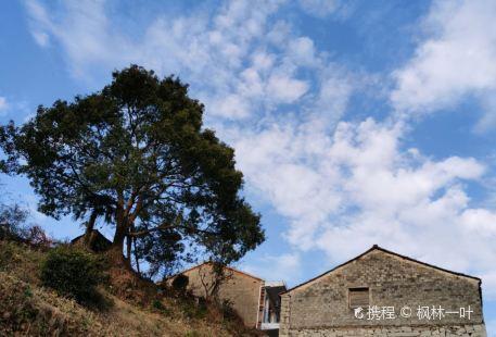Chengqi Farm
