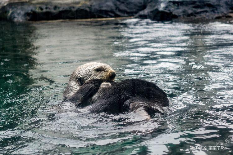 Seattle Aquarium4