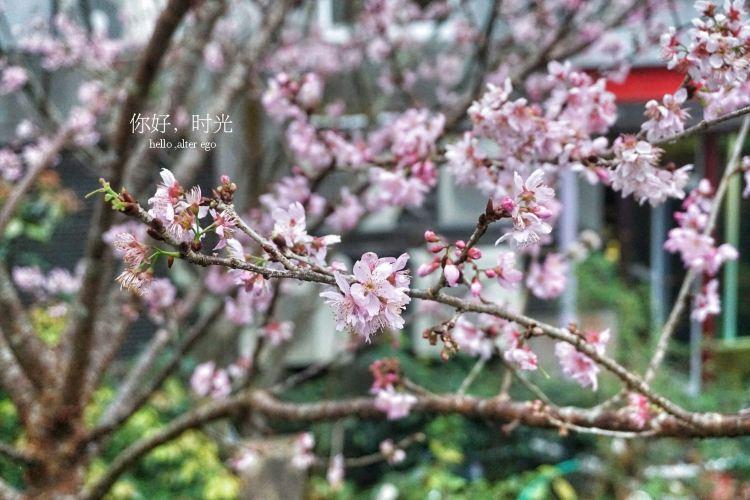 Xitou Nature Eduction Area3