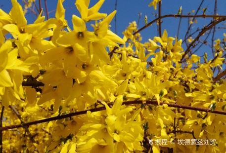 Dongfang Jindi Chuidiaocheng