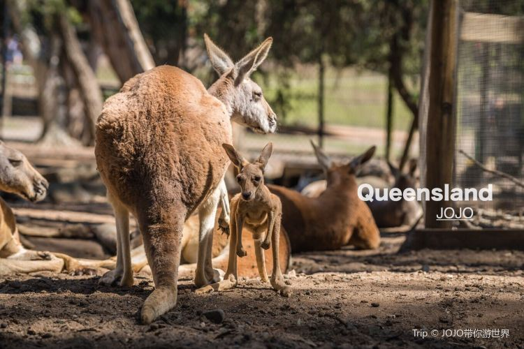 Currumbin Wildlife Sanctuary3
