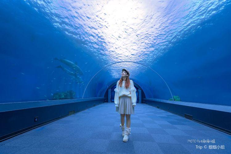 八景島海島樂園1