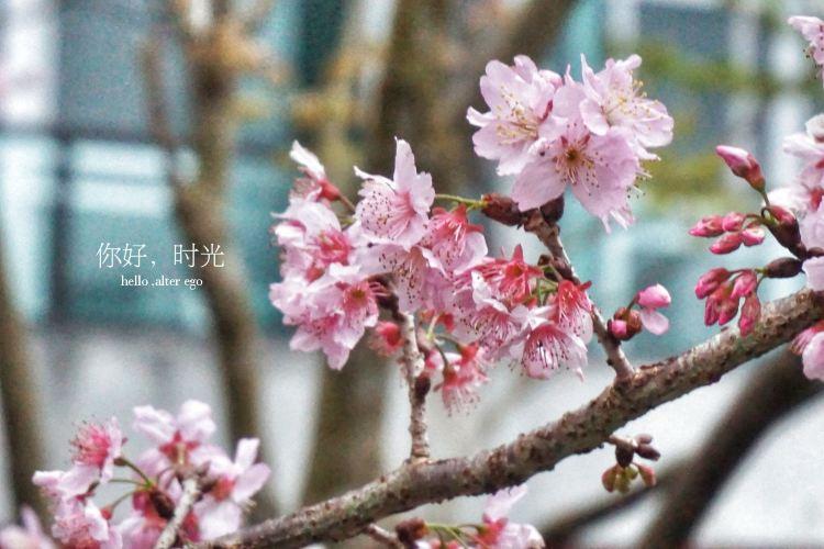 Xitou Nature Eduction Area2