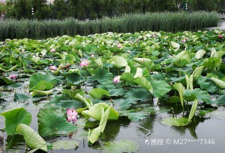 Weiminhu Lvse Ecological Park
