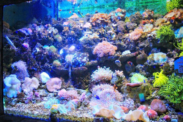 줘하이 해저세계4