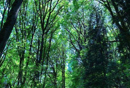 Coal Creek Trails