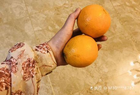 ZJ-終極密室逃脫(青松店)