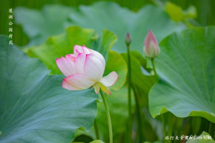 Lianhu Lake Park2