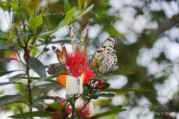 Entopia by Penang Butterfly Farm4