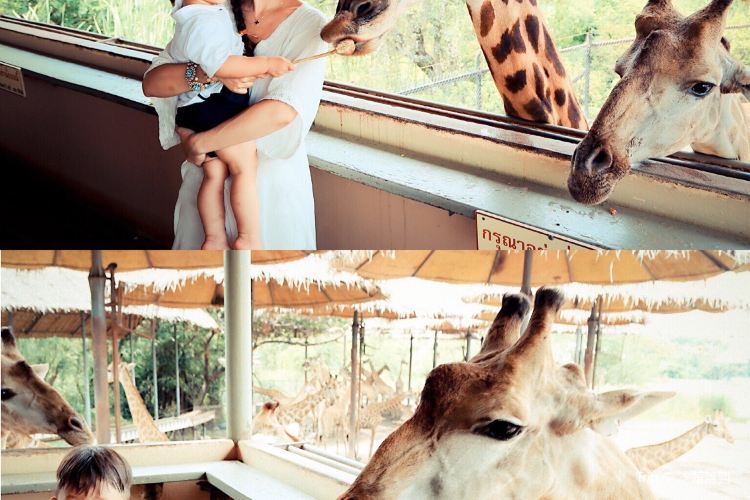 Safari World1