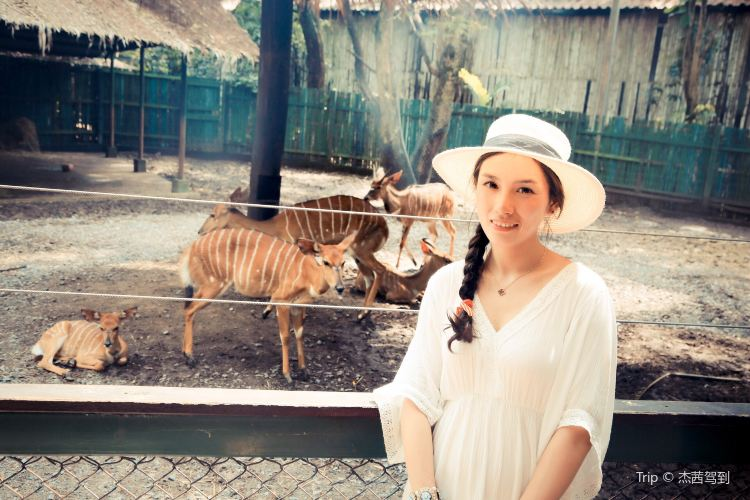 Safari World4