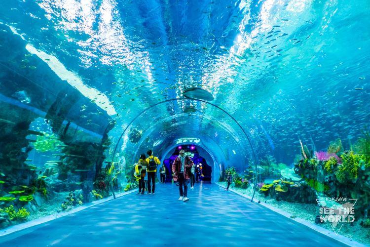 Shanghai Haichang Ocean Park4