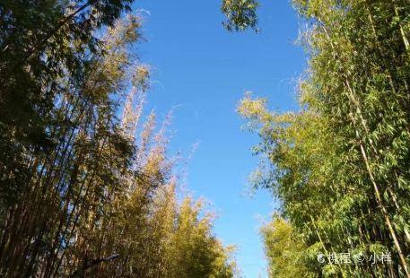 Yiyun Forest Hot Spring in Jigong Mountain