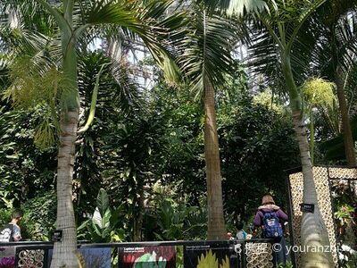 エルサレム植物園