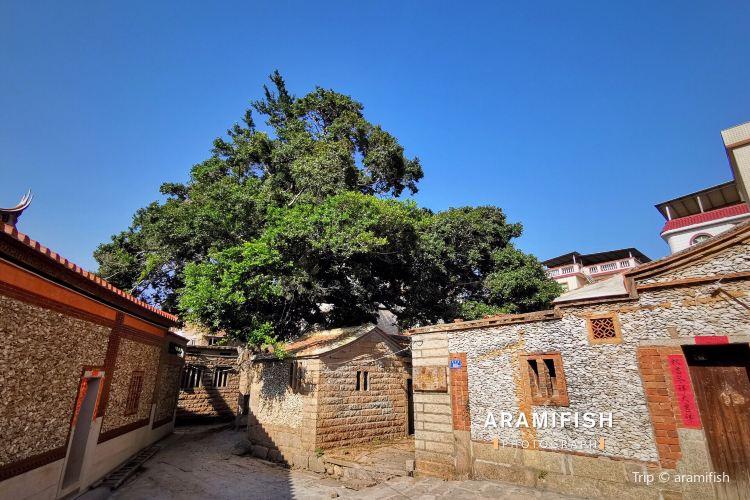 Xunpu Village2