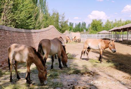 Shenzhou Desert Wild Animal Park