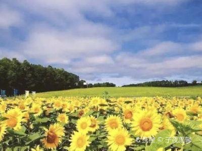 Home of Sunflower