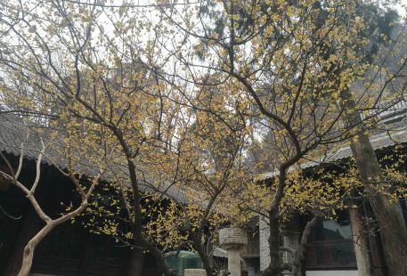 Fengyu Senlin Gongyuan Longtan Xi Shui Sceneic Area
