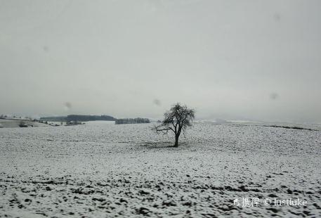 Islandpferde Haidershofen