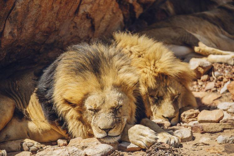 Aquila Private Game Reserve - Day Trip Safari4