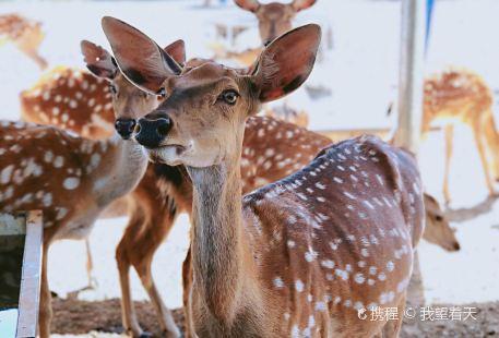 萬安山野生動物歡樂世界