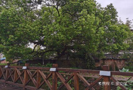 Kaixuan Park