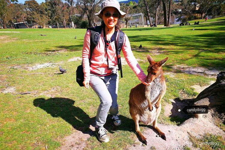 Ballarat Wildlife Park4
