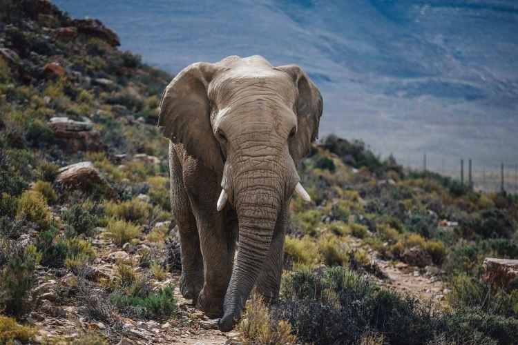 Aquila Private Game Reserve - Day Trip Safari2