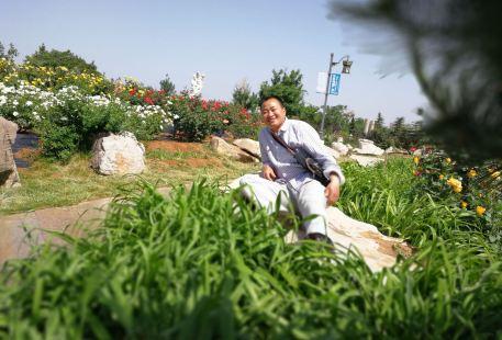 China Chinese Rose Garden