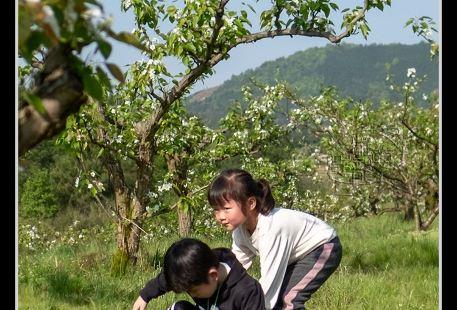 Lichuan Huashan Comprehensive Kenzhichang Huashan Forest Farm