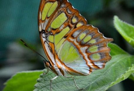Monteverde Butterfly Garden (Jardin de Mariposas)
