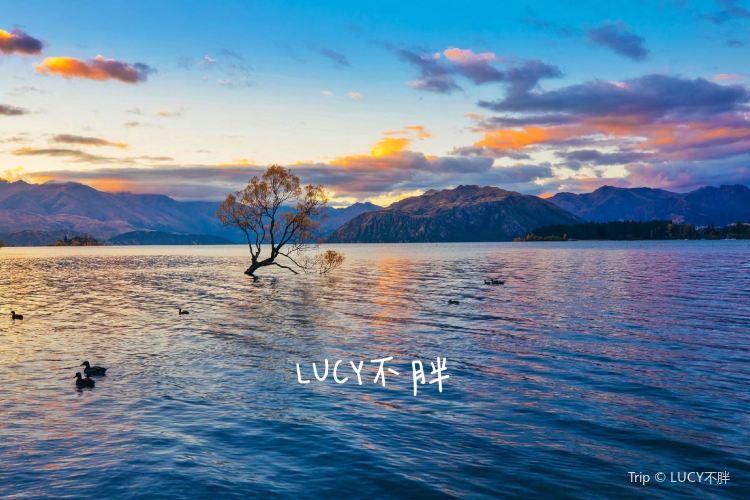 Lone Tree of Lake Wanaka1
