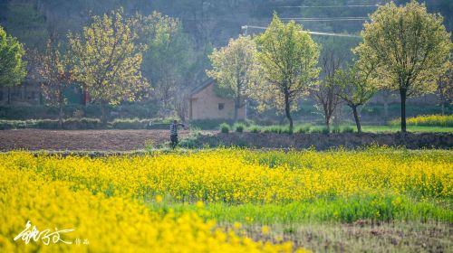 Qingyang