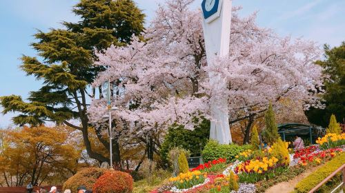 Jayu Park