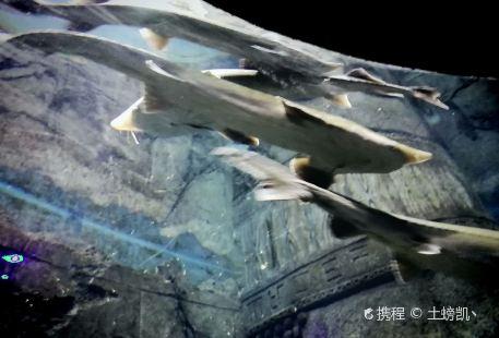 Chongqingshi Bananqu Archives