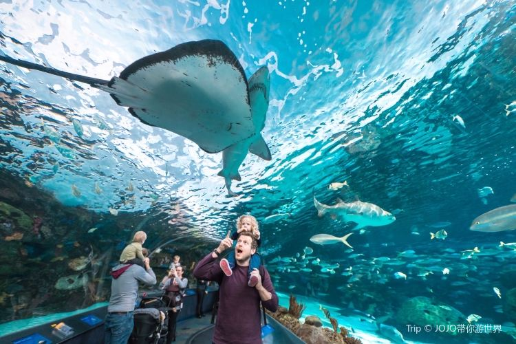 Ripley's Aquarium Of Canada4