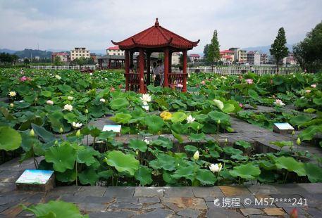 Lotus Expo Park