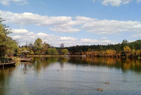 長白山美人松雕塑公園