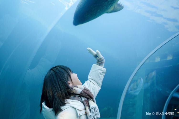 札幌市圓山動物園2