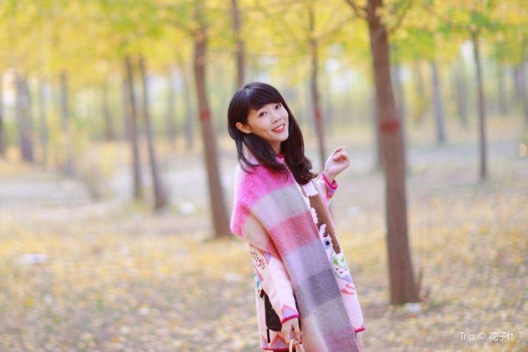 Jinan Huanghe River Forest Park4