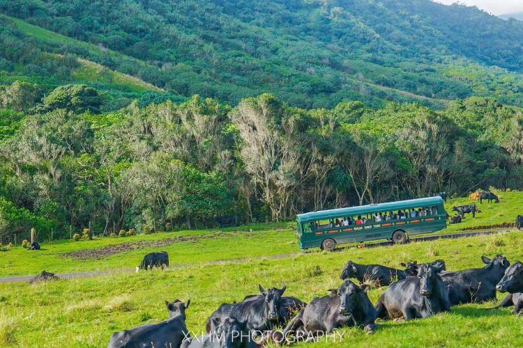 Kualoa Ranch4