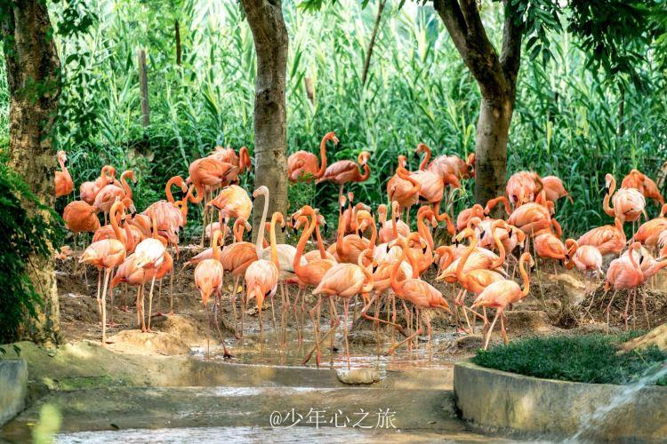 Xinghu Wetland Park2
