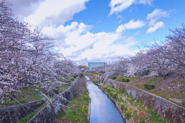 Yamazaki River1