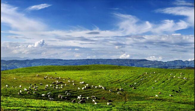 放馬坪高山草原