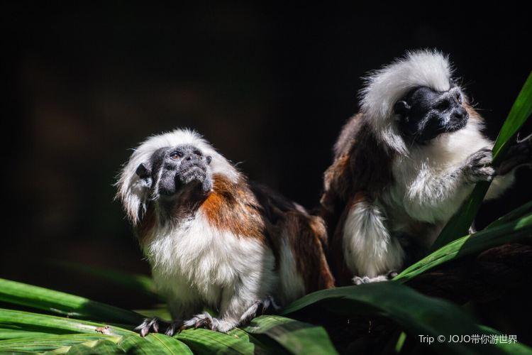 可倫賓野生動物保護區4