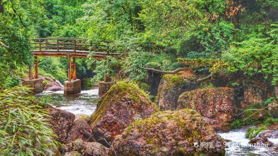Longcanggou Guojia Ji Forest Park