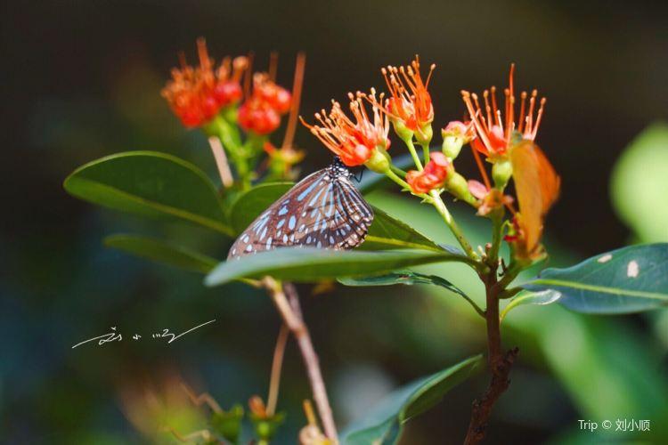 Entopia by Penang Butterfly Farm1
