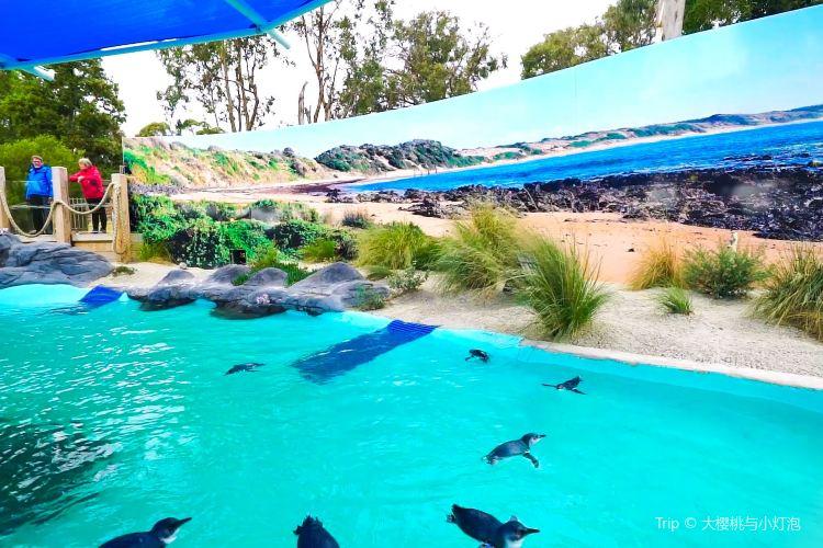 Ballarat Wildlife Park2