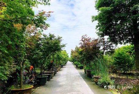 원장 뤼다오 단풍낙엽축제