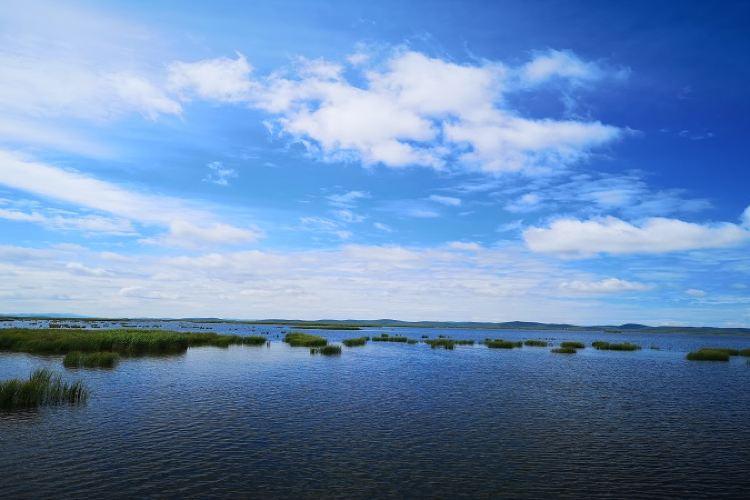 Zoige Flower Lake1